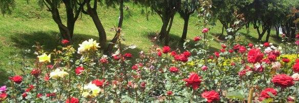 Government-Rose-Garden-My-Taxi-India.jpg