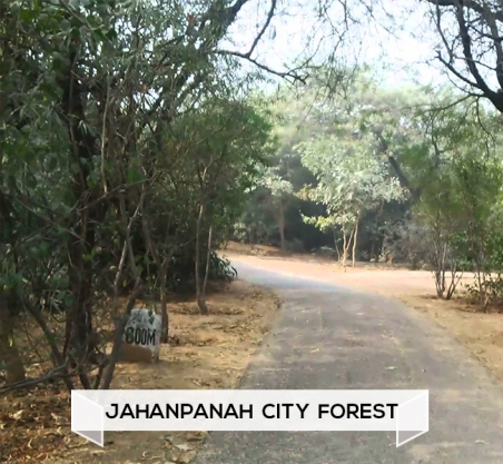 Jahanpanah  City  Forest.jpg